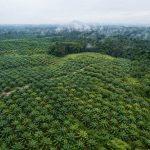 Should You Buy a Palm Oil-Free Shampoo?